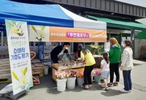 충북농기원 나리 육성품종 '루멘옐로우' 호응
